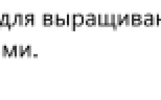 Dracaena marginata уход в домашних условиях