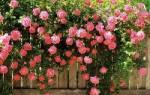 Распознать цветок