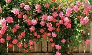 Как определить название цветка по внешнему виду