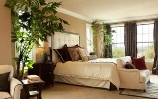 Растения для спальни благоприятные
