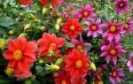 Цветы веселые ребята