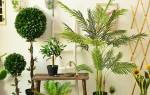 Высокие растения для дома