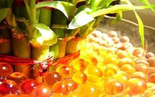 Водяные шарики для цветов