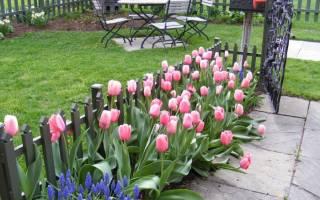 Когда нужно сажать тюльпаны