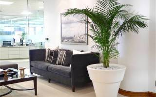 Домашние цветы пальмы