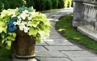 Какие цветы посадить в тени
