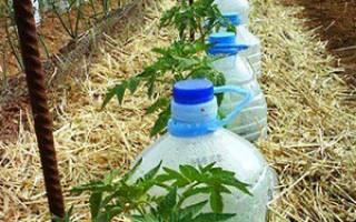 Автополив из пластиковой бутылки
