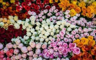 Значение цвета роз при дарении