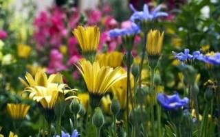 Интересное о цветах