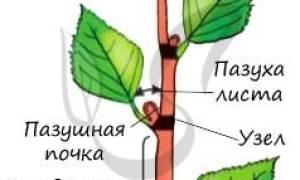 Как определить растение по листьям