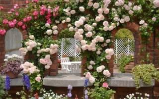 Плетущиеся розы где садить и как ухаживать