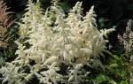 Влаголюбивые растения для сада