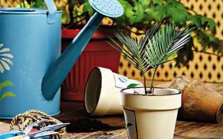 Актара для комнатных растений