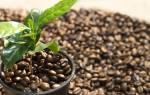 Как вырастить кофейное дерево в домашних условиях
