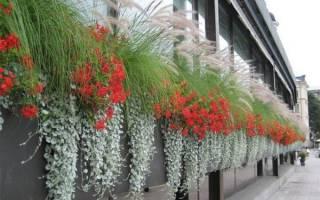 Ампельные садовые цветы