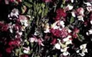 Цветок на букву г название