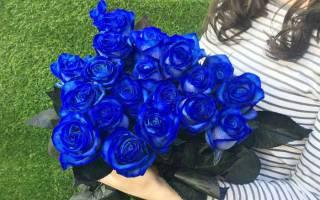 Значение синей розы