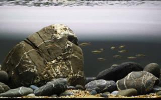Растения в аквариуме без воды