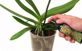 Чем подкармливать орхидею в домашних условиях