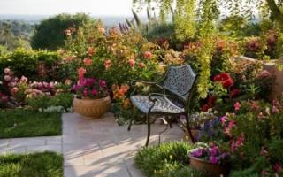 Парковые розы посадка и уход
