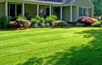 Как правильно засеять газонную траву на даче