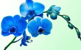 Как правильно обрезать орхидею