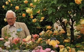 The poets wife роза