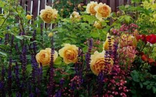 Какие цветы сочетаются с розами на клумбе