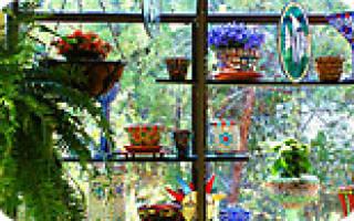 Мир комнатных растений и цветов