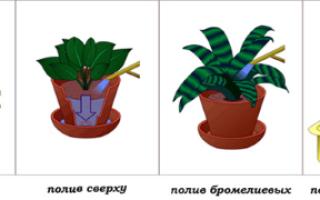 Какой водой поливать комнатные растения