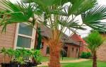 Комнатные пальмы каталог с фотографиями и названиями