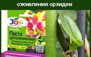 Цитокининовая мазь для орхидей