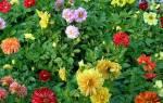 Веселые ребятки цветы