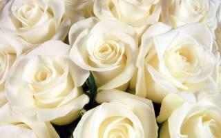 Белые розы что символизируют