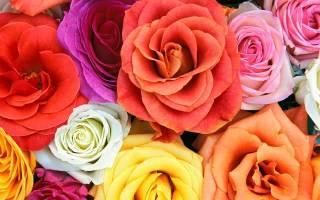 Красная роза символ