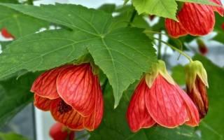 Цветы с красивыми листьями