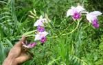 Орхидея как называется по другому