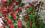 Подставка для роз