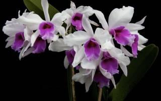 Плесень на орхидеях как избавиться