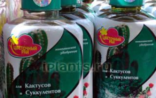 Удобрение для кактусов и суккулентов