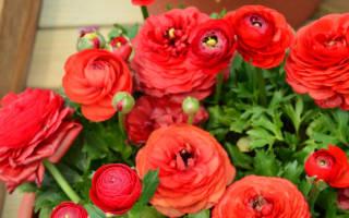 Цветы похожие на розочки