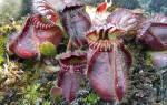 Домашнее цветоводство комнатные растения