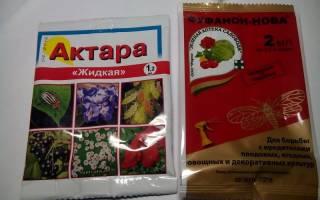 Актара инструкция по применению для комнатных растений