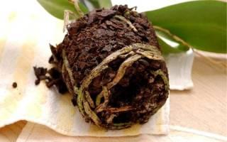 Можно ли сажать орхидею в обычную землю