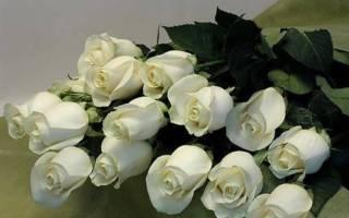 Белые розы значение цветов