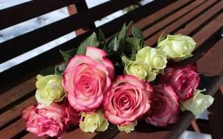 Как розу размножить черенками из букета