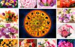 Цветы льва по гороскопу