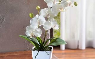 Отломился цветонос у орхидеи что делать