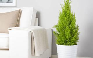 Растения очищающие воздух в квартире