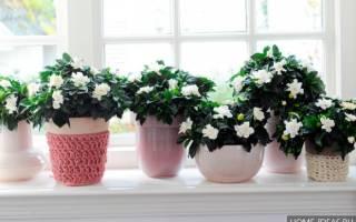 Долгоцветущие комнатные растения